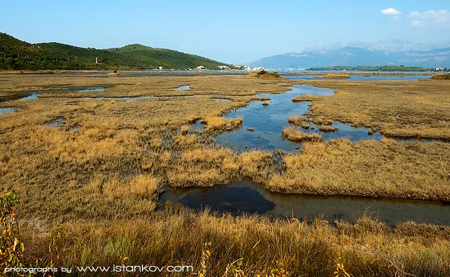 Swamps of Tivat Salt plants